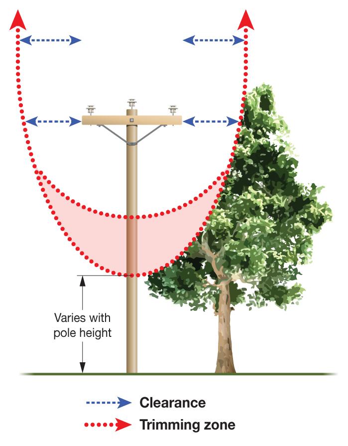 Tree trimming zone